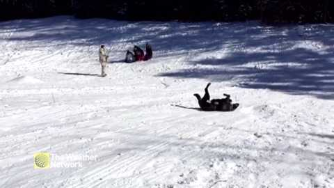 Cute Dog Slides Down Entire Toboggan Hill Just Had To Join The Fun