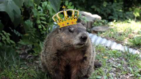Groundhog Day An Origin You Need To Know To Understand This Tradition