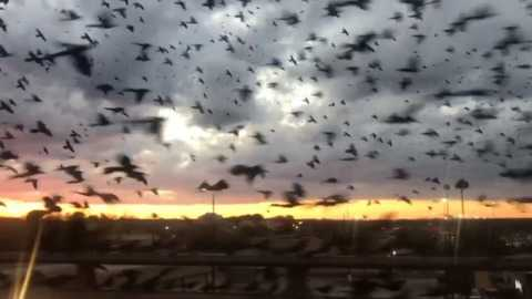 Bird Pocalypse Takes Over The Skies On A Texas Highway